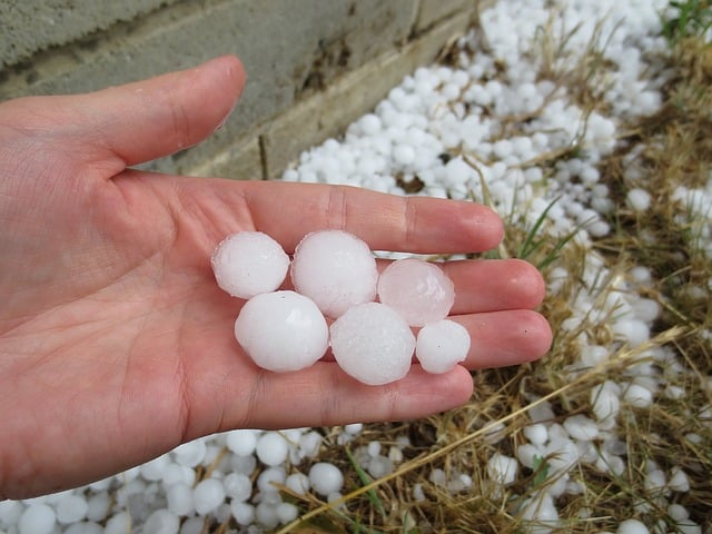 Large hail stones from recent storm in Sydney.